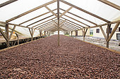 Drying of cocoa in solar dryer, Drying and bagging center, CECAB, Organic Cocoa Production and Export Cooperative, Fair Trade, Guadalupel, Sao Tome and Principe Island