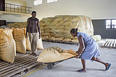 Preparation of bags for export, Bagging and drying center, CECAB, Organic Cocoa Production and Export Cooperative, Fair Trade, Guadalupel, Sao Tome and Principe Island