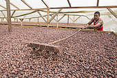 Turning cocoa beans for homogeneous drying, Drying and Bagging Center, CECAB, Organic Cocoa Production and Export Cooperative, Fair Trade, Guadalupel, Sao Tome and Principe Island