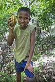 Boy showing a mature cocoa pod in a plantation, Bela Vista Village, Sao Tome and Principe Island
