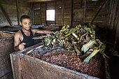 Fermentation tank in the cocoa bean processing center, CECAB, Organic Cocoa Production and Export Cooperative, Fair Trade, Manha Sol, Sao Tome and Principe Island