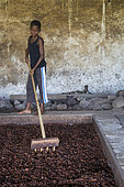 Boy showing cocoa beans in a dryer, Bela Vista Village, Sao Tome and Principe Island