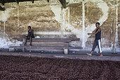Boy in a cocoa beans dryer, Bela Vista Village, Sao Tome and Principe Island