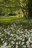 Private wild garden, the corner of the Daisies