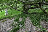 Romantic private garden, area of gravel and ivy under an old willow