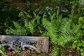 Male fern (Dryopteris filix-mas) and Knotweed (Polygonum microcephala) 'Red dragon' and garden decoration