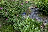 Private garden, Fortune meadowsweet (Spiraea japonica) 'Shirobana', Pineapple Lily (Eucomis autumnalis) leaves, slate path