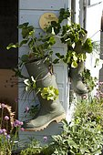 Boot used as a flowerpot, Hijacked object