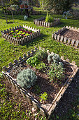 Aromatic plants an salad in square foot kitchen garden, Provence, France