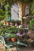 Various herbs in pots, Provence, France