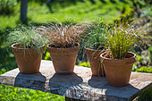 Festuca glauca and Carex comans 'Bronze', 'Frosted' and 'Prairie Fire', Provence, France