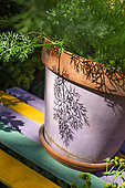 Fennel in pot, Provence, France