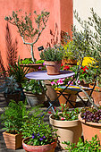 Terrace with various pot plants including olive trees, Provence, France