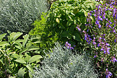 Aromatic plants in a square foot kitchen garden, Provence, France