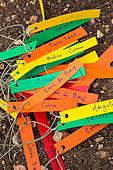 Tomato planting - Plant labels, Provence, France