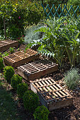 Lettuce seeding protected from the sun with trays, Vegetable Garden, Provence, France
