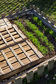 Dill and mesclun seedings protected from the sun with trays, Provence, France