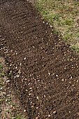 White mustard seeding (green manure) to the Vegetable Garden, Provence, France