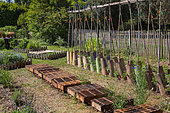 Tomatoes on stakes and White mustard seeding protected from the sun with trays, Vegetable Garden, Provence, France