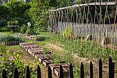 Tomatoes Planting and White mustard seedlings protected from the sun by crates, Vegetable Garden, Provence, France