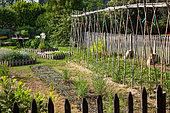 Tomatoes Planting and White mustard seedlings, Vegetable Garden, Provence, France