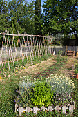 Herbs in a square foot vegetable garden and Tomatoes on stakes, Provence, France