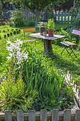 Lilies, gladioli, dahlias and aromatic plants in pots, Vegetable Garden, Provence, France
