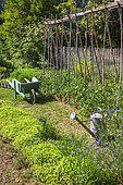 Bed of White mustard and tomatoes on stakes, wheelbarrow and watering in vegetable garden, Provence, France
