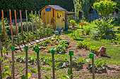 Shack, row of tomatoes on stakes and Zucchini in vegetable garden in June, Provence, France