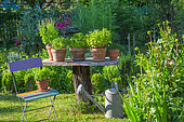 Herbs in pot displaying on a table made of a dead tree, Provence, France