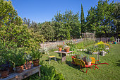 White mustard, Square foot kitchen garden, Tomatoes on stakes, Dahlias cactus, Wheelbarrow, table and aromatic plants in the vegetable garden, Provence, France