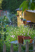 Sprinkler irrigation and cabin in Vegetable Garden, Provence France