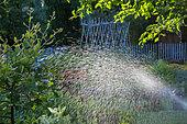 Sprinkler irrigation in the Vegetable Garden, Provence, France