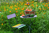 Summer harvest of fruits and vegetables on a small garden table, Provence, France