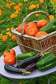 Summer harvest of vegetables on a small garden table, Provence, France