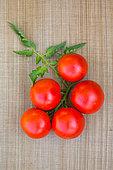 Tomato 'Paola', Provence, France