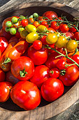 Mixed tomatoes, Provence, France