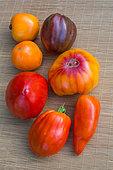 Tomatoes 'Cornue des andes', 'Coeur de Boeuf - Ox Heart' red and yellow, 'Pineapple', 'Noire de Crimée' - Provence, France