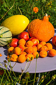 Mixed summer fruits and vegetables, Provence, France