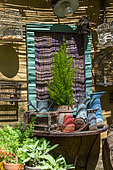 Monterey Cypress in pot in front of a garden shed, Provence, France