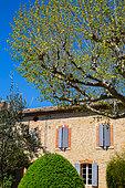 Platane, buis et olivier devant un mas provençal en Avril, Provence, France