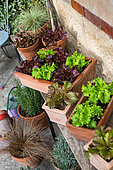 Salad growing in containers in front of a traditional house in Provence