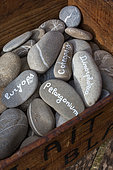 Flower names written on pebbles, Provence, France