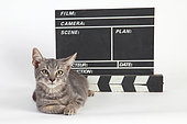 3 months old kitten lying in front of a movie clap on white background