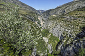Views from the area of the Cavaliers Inn, above the Imbut Trail, the wildest area of the Verdon Canyon, The Verdon Gorge, Prealapes, France