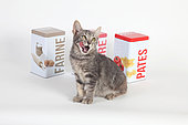Kitten yawning in front of food boxes on white background