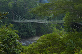 bridge in forest, Danum valley, Ssabah, Borneo, Malaisie