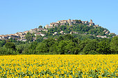 Field of Sunflowers in flower with in the background the medieval and tourist village of Cordes-sur-ciel, Tarn, classified among the most beautiful villages of France