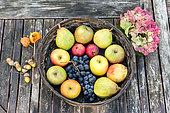 Basket of various fruits in a basket on a garden table, autumn, Pas de Calais, France