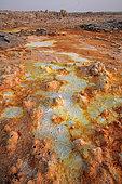 Dallol hot spring with salt concretions coloured by sulphur, potassium and iron, Dallol volcano, Danakil depression, Ethiopia